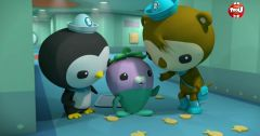Les Octonauts : Octonauts du 11 mai 2018 – Replay TF1