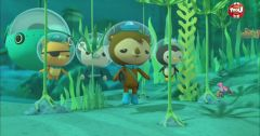 Les Octonauts : Octonauts du 18 mai 2018 – Replay TF1