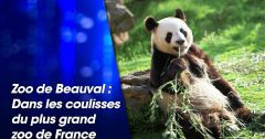 Documentaires : Zoo de Beauval : dans les coulisses du plus grand zoo de France du 29 août 2018 – Replay TMC